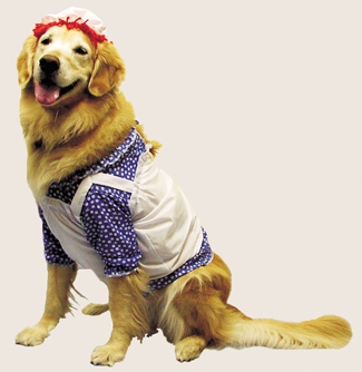 Featured Image for Raggedy Ann Pet Costume