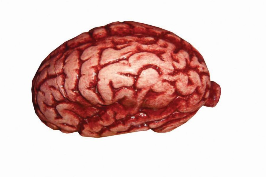 Featured Image for Latex Brain Latex