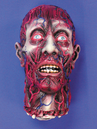 Featured Image for Skinned Head