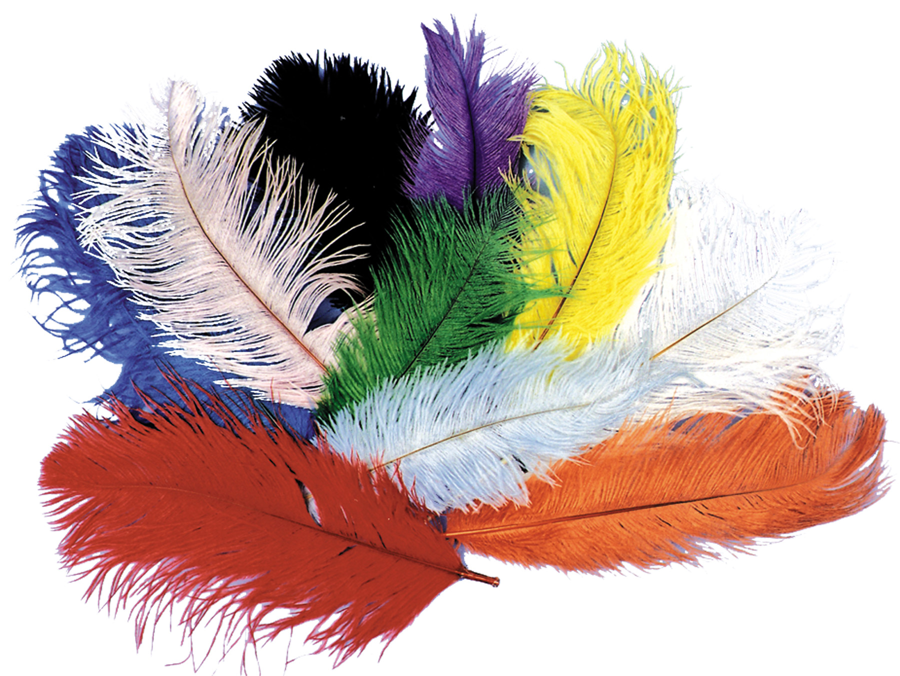 Featured Image for 12″- 16″ Ostrich Plume