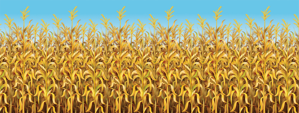 Featured Image for 4′ X 30′ Cornstalks Backdrop